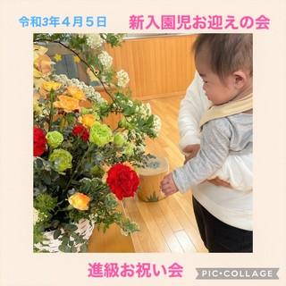 なる花.jpeg